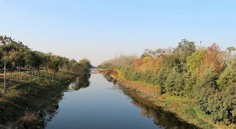 最近,筆者到農村采風,來到譙城區亳宋河岸邊,被迷人的秋色風景所吸引,順手拍下這皖北特有的別致秋色。    站在大橋上,一眼望去美麗的秋色呈現在眼前,碧水藍天,秋色的美景讓人流連忘返。    俗話說得好,一方熱土養育一方人,生活在這里的農民們心腸特別好,很淳樸很勤勞,他們在這里安家立業,生兒育女,暢享濃濃的鄉村氣息。    農村雖然沒有城市繁華,熱鬧非凡,但是天空格外湛藍,秋天的農村時刻洋溢著豐收的氣息。    楓葉在秋意濃濃中彰顯它獨有的特色,隨風飄舞,向路人示意它的存在。    楓葉紅了,層林盡染